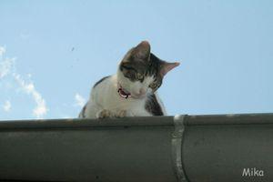 chat-de-goutiere.jpg