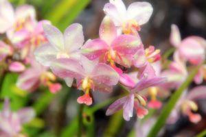 fleurs 2667B