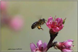 vol-de-pollen-4386.JPG