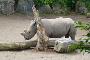 zoo lille (8)