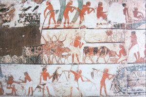 relief---recolte-du-papyrus-saqqarah.jpg