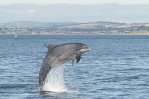 f7cba5d6a0_Tursiops-troncatus_VincentJanik-University-of-St.jpg