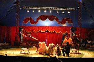 Festival-Arts-du-cirque-1309.JPG