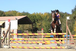 Concours-equitation-2 3725 720