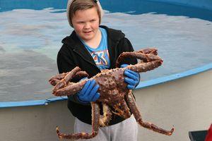 0126-Skarsvag-village de pêcheurs-un crabe royal
