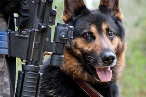 USAF_War_dog-copie-1.jpg