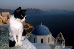 chat grec