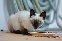 alimentation-chats