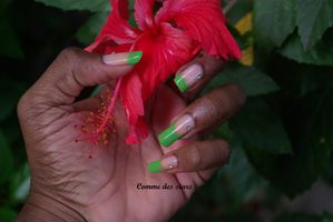 Hibiscus french gaga for green