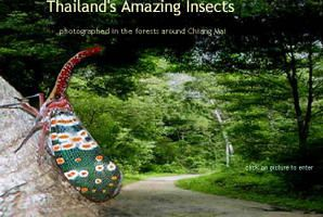 insectsthailand.jpg