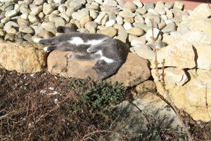 avantprintemps3.JPG