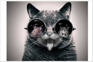 chat-lunette-.png