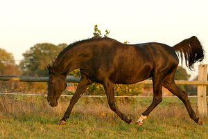 chevalnoir0md.jpg