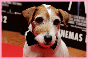 Uggie the dog000