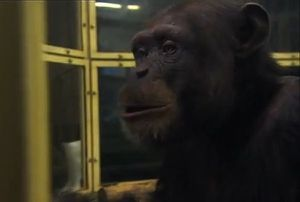 Ayumu-le-chimpanze-le-plus-intelligent.jpg
