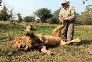 Tron lion