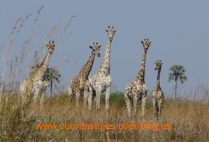 Africa.Botswana (Camp Selinda-Linyanti)a.15