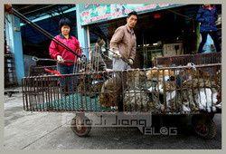 chats urgence animaux de chine blog bragance