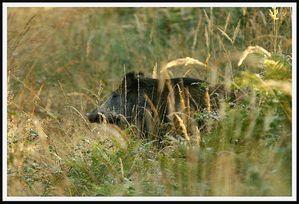 PICT0064-005.JPG