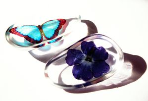 Blue Morpho Butterfly & Flower