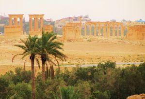 Palmyra (Siria)1