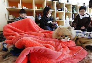 pomeranian-survive-earthquake-tsunami-japan.jpg