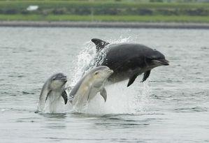 Femelle-sauvage-et-ses-jumeaux-Morey-Firth--C--Asprey.jpg