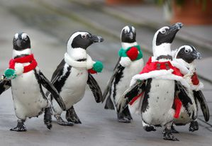 christmas-penguins_2054834i.jpg