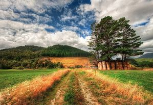 New-Zealand-The-Gentle-Grasses