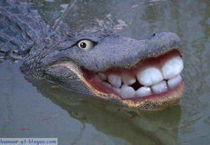 photos-humour-marrant-crocodile.jpg