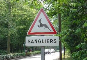 sanglier-insolite.jpg