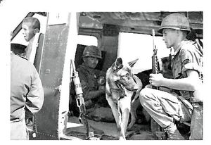 war-Dog-Vietnam-1967.-9.jpg