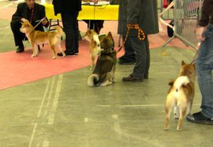 expo-canine-2010 1634
