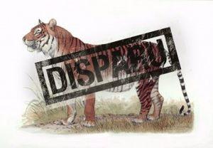 tigre-de-java.jpg