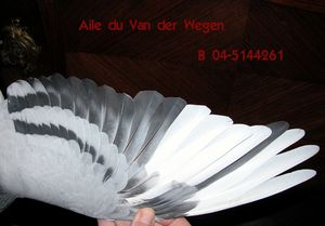 Aile-VDW-1-copie.jpg
