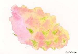 pitaya12