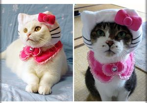 247-chat hello-kitty