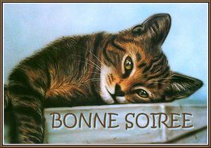 bonne-soiree-chat.jpg