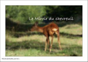chevreuil__capreolus_capreolus.jpg