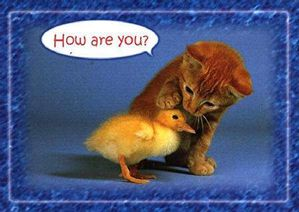 photo-humour-chat-poussin-animaux-014.jpg