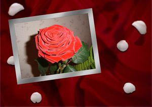 carte-denise-rose-pour-blog_01.jpg