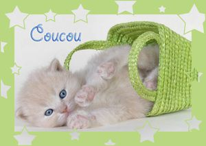 01 gif coucou chat