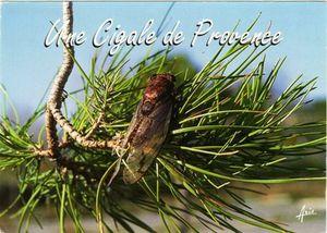 une-cigale-de-Provence.jpg