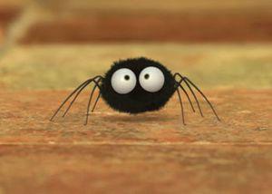 Minuscule araignée