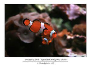 Aquarium tropical de la porte dorée par Olivier R-copie-18