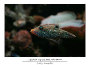 Aquarium tropical de la porte dorée par Olivier R-copie-40