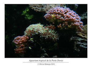 Aquarium tropical de la porte dorée par Olivier Roberjot 4