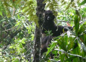 Parc de Ranomafana - Madagasca 2