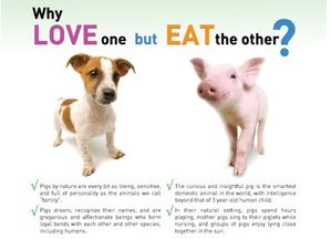 love-one-eat-other.jpg.468x0_q85_crop-smart.jpg