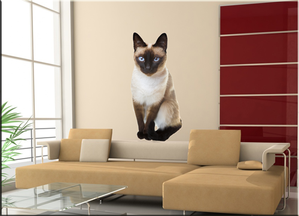 chat-siamois-photo.png
